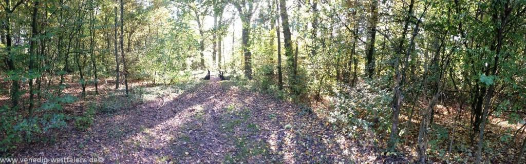 Wandern in Lippstadt bei traumhafter Wald Idylle